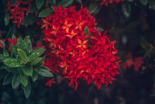 Beautiful Red Spike Flower. Ki...