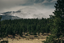 Elk Graze In A Meadow In Rocky Mountain National Park, Colorado.