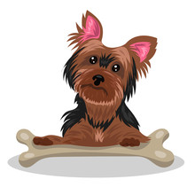 Dog Yorkshire Terrier With Bon...