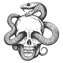 Skull With Snake Tattoo