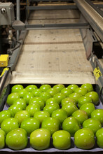 Granny Smith Apples In A Fruit Packaging Warehouse
