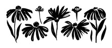 Chamomile Hand Drawn Paint Vector Set. Ink Drawing Flowers And Plants, Monochrome Artistic Botanical Illustration.
