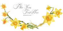 Daffodil Flowers In Floral Watercolor Arc On A White Background, Traced Art