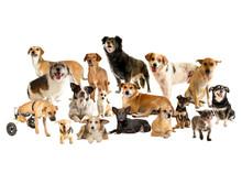 Cães, Vira-latas, Animal, Ca