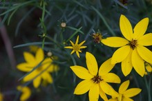 Yellow Flowers With Pointy Pet...