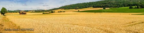 Fototapeta Beautiful wide Meadows in Summer obraz