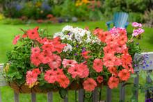 A Garden Planter Full Of Petunias And Geraniums In A Back Yard Garden.
