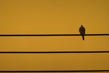 A Bird Alone On Electric Line With Sunset Sky Background