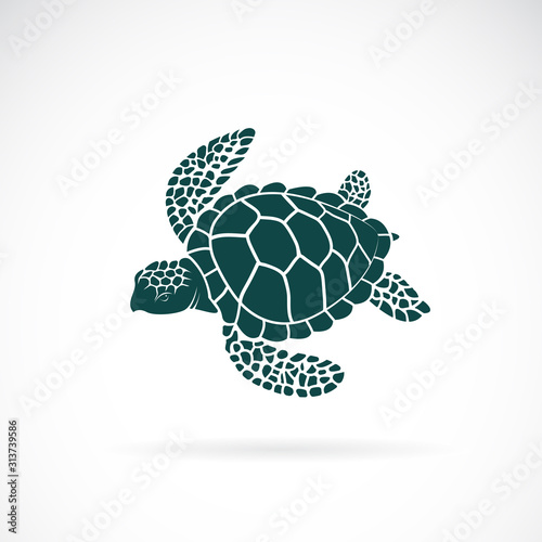 Vector of turtle design on a white background Wallpaper Mural