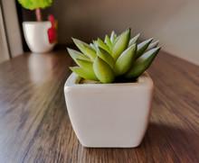 Cactus Succulent In White Cera...