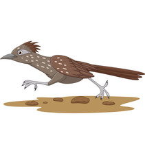 Cartoon Roadrunner Bird Running On The Road
