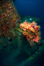 Old Stairs In Sunken Shipwreck Full Of Colorful Coral And Sponges. Wreck Scuba Diving