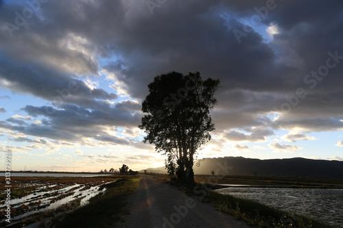 Photo Anochecer en camino del Delta del Ebro,Cataluña