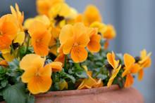 Springtime Flowers: A Flower P...