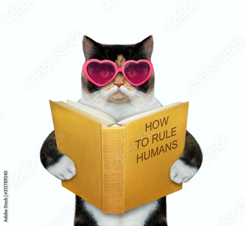 Fototapeta The multicolor cat in pink heart shaped glasses is reading a book called how to rule humans. White background. Isolated. obraz