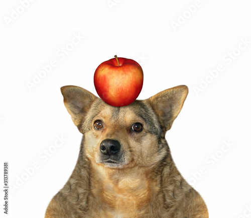 The beige dog with a red apple on his head Canvas Print