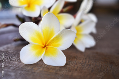 frangipani flower on wooden background Tableau sur Toile