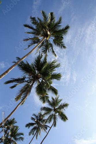 Photo Coconut palm trees against blue sky