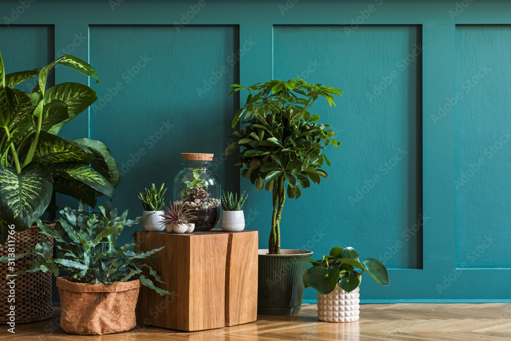 Fototapeta Modern composition of home garden filled a lot of beautiful plants, cacti, succulents, air plant in different design pots. Stylish botany interior. Green wall paneling. Template Home gardening concept