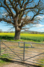 Summertime Fields And Farm Gate