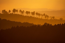 Amazing Hills At Sunset With Trees In A Row On Top