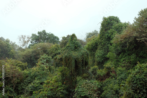 Forest in the north of laos. Canvas Print