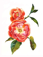 Red Dogrose Brunch Watercolor