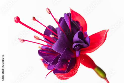 Obraz nice fresh flower on the white background - fototapety do salonu