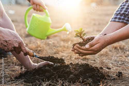 Obraz Environment earth day, Hands of tree man helping were planting the seedlings and growing of young sprout trees growing into the soil in the garden, protection for care new generation - fototapety do salonu