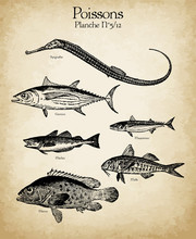 Gravures Anciennes Poissons N°5/12