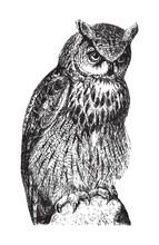 Eurasian Eagle Owl (Bubo Maxim...