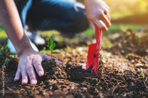Closeup image of a woman using shovel to plant a small tree in the garden