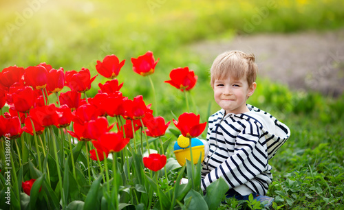 Fotomural Little child walking near tulips on the flower bed in beautiful spring day