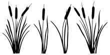 Set Of Simple Silhouettes Of Bulrush Or Reed Or Cattail Or Typha Leaves In Black Isolated On White Background.
