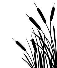 Corner Bunch Of Bulrush Or Reed Or Cattail Or Typha Leaves Silhouette In Black Isolated On White Background.