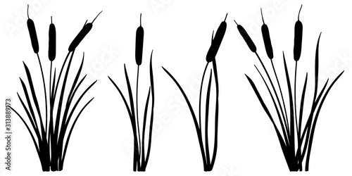 Fototapeta Set of simple silhouettes of Bulrush or reed or cattail or typha leaves in black isolated on white background
