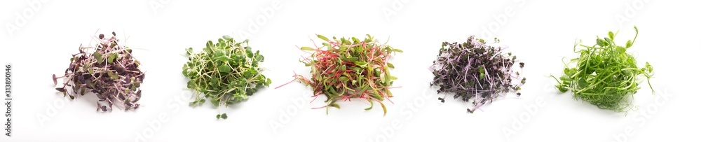 Fototapeta Assortment of fresh micro greens close up isolated on white