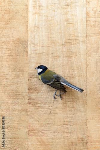 Cuadros en Lienzo  Small dead tit on an old wooden board