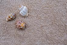 Three Snail Shells On A Terry ...