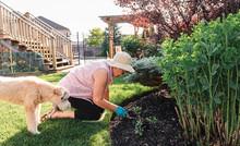 Older Woman Planting Flowers I...