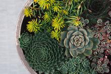 Arrangement Of Succulent Plant...