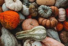 Pumpkins And Gourds Autumn Harvest