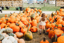 Pumpkin Farm With Children