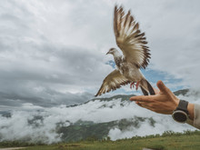 Close Up Of Pigeon Flying Out Of Hands Of Man