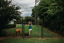 Young Boy Climbing Fence To Play With Golden Lab And Schnauzer Dog