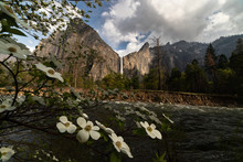White Flowers Near River With Waterfall In Background.