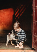 Baby Toddler Boy Playing With A Pug Puppy Dog