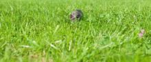 Small Gray Kitten Is Hiding In...