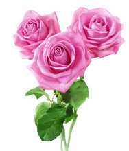 Beautiful Roses Bunch Isolated...