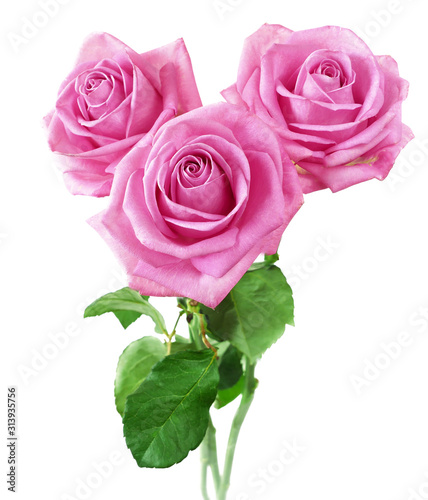 Beautiful roses bunch isolated on white background Canvas Print